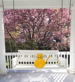 Cat+on+porch+swing