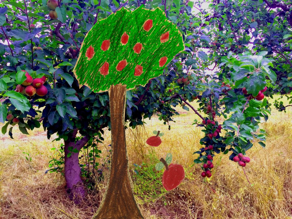 Sebastopol Apple Tree psd